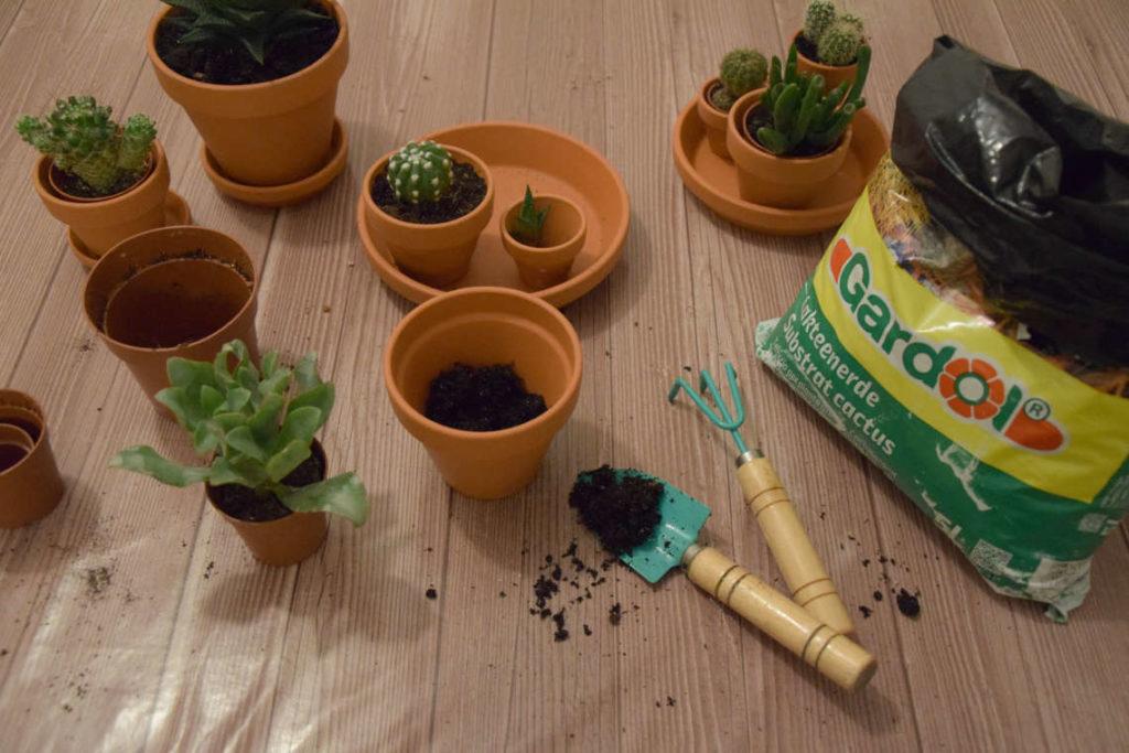 Mini Kakteen in Tontöpfe einpflanzen DIY